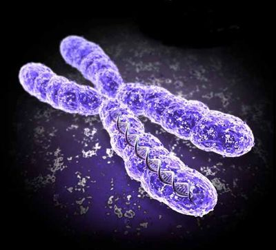 An image of a chromosome. A mutated X chromosome can be the cause of Lowe's Syndrome