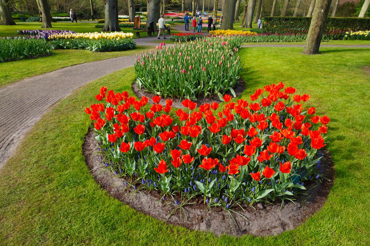 Цветы для клумбы фото с названиями большие