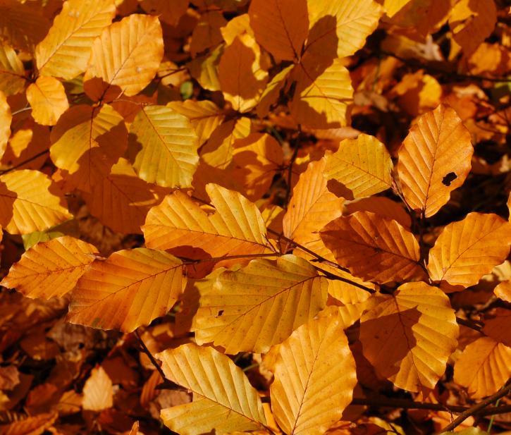 autunm equinox leaves