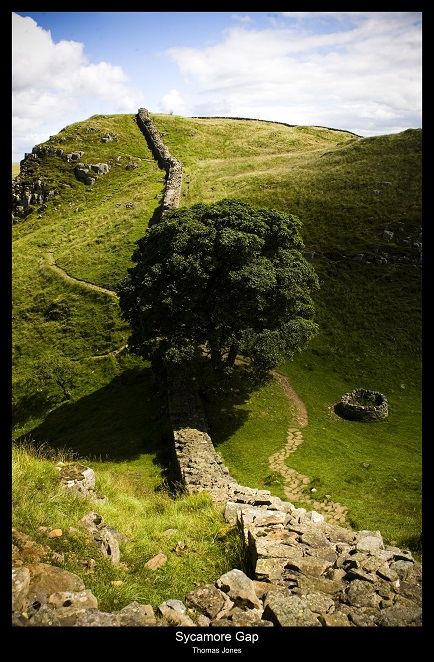 Sycamore Gap 2 copy