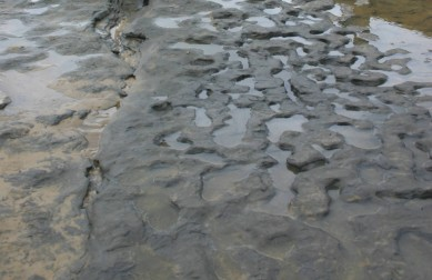 ancient footprints