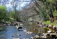 'Fish pass' to Enhance Health of River Derwent