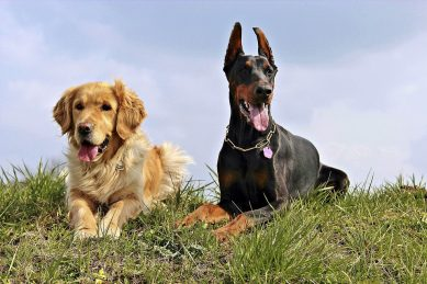 County Durham Backs Council's Dog Control Plans