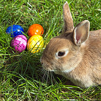 Easter Eggs, the Easter Bunny - Some Easter Sunday Facts