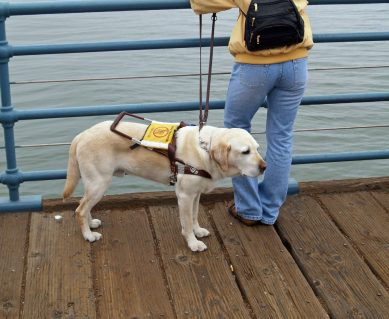 Taxi Driver Gets Criminal Record for Refusing to Take Assistance Dog