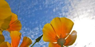 photo courtesy of torbakhopper, from Flickr Creative Commons